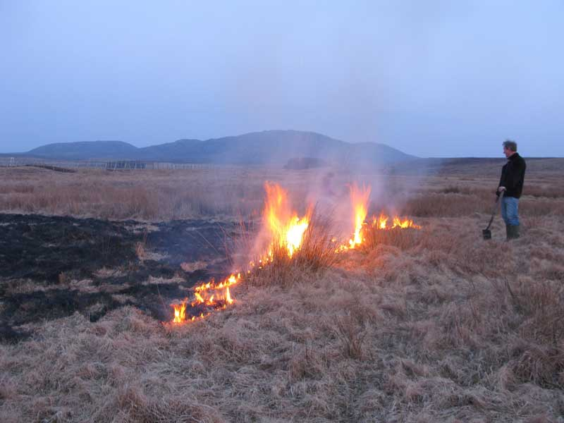Burning old grass on the croft at Shawbost
