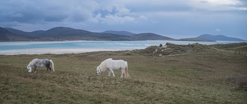 Horses at Losgaintir on the Isle of Harris